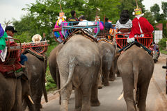 Ordination parade on elephant's back Festival. Stock Photo