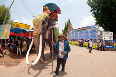 Ordination parade on elephant's back Festival. Stock Images