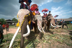 Ordination parade on elephant's back Festival. Royalty Free Stock Images