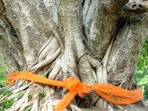 Ordinierter Bodhi Baum Stockfotografie