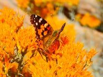 Ordna till för elevator av fjäril i orange Bush Arkivbild