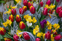 Ordnad grupp av blommor Arkivbild