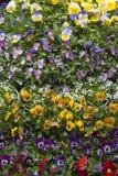 ordnade blommor arkivfoto