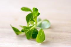 Ordnar till ätliga healhy sidor för Valerianellalocustagräsplan på trätabellen, för att äta royaltyfri fotografi