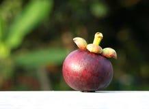 Ordnen Sie eine Mangostanfrucht Lizenzfreies Stockfoto