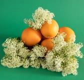 Ordning av apelsiner i vita l?sa vildblommor p? en gr?n bakgrund arkivbilder