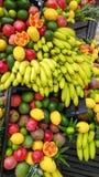 Ordning av exotiska frukter Arkivbilder