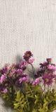 Ordning av konstgjorda blommor som lokaliseras på jutesäckvävbakgrund som är användbar som den easter bakgrund och vykortet Arkivbild
