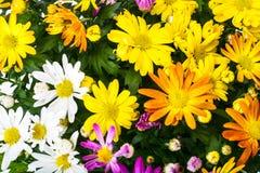 Ordning av nya blommor i en kruka Royaltyfri Foto