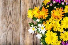 Ordning av nya blommor i en kruka Arkivfoto