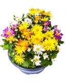 Ordning av nya blommor i en kruka Fotografering för Bildbyråer