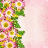Ordning för aster och för lösa blommor Arkivbild