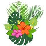Ordning för tropiska växter och blomma Royaltyfri Bild
