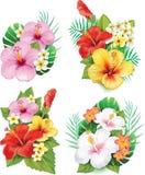 Ordning från hibiskusblommor stock illustrationer