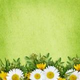 Ordning och ram för lösa blommor Royaltyfria Bilder
