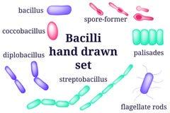 Ordningar av den bacillibacterial mikroorganismen vektor illustrationer