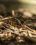 Ordures de feuille, débris de végétal, moche ou détritus formant une couche au sol photo libre de droits