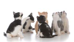 ordures de jeunes chatons Images libres de droits