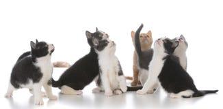 ordures de jeunes chatons Photographie stock libre de droits