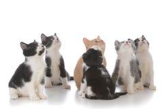 ordures de jeunes chatons Photographie stock