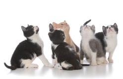 ordures de jeunes chatons Image libre de droits