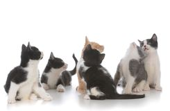 ordures de jeunes chatons Photo stock