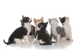 ordures de jeunes chatons Photo libre de droits