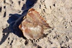 Ordures et débris sur la plage image stock