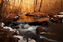 Ore dorate - Forest Treasure - il paese delle meraviglie di inverno fotografie stock libere da diritti