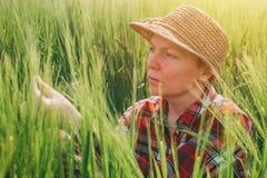 Orecchie d'esame dell'orzo dell'agricoltore femminile Immagini Stock Libere da Diritti