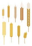 Orecchie del cereale royalty illustrazione gratis