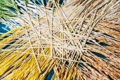 Orecchie del dettaglio del grano e del riso Fotografia Stock Libera da Diritti