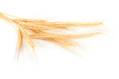 Orecchie del frumento Immagine Stock Libera da Diritti