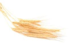 Orecchie del frumento Fotografie Stock