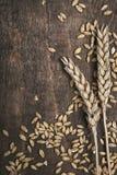 Orecchie del frumento Fotografia Stock Libera da Diritti