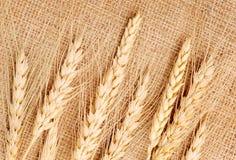 Orecchie del frumento su una tessile Fotografie Stock Libere da Diritti