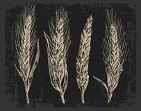 Orecchie del grano Colore in bianco e nero Schizzo del forno Immagine Stock Libera da Diritti