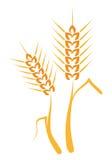 Orecchie del grano del disegno della mano Fotografia Stock