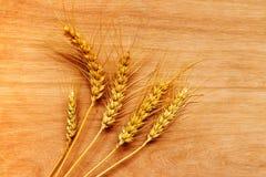 Orecchie del grano dopo il raccolto Fotografie Stock