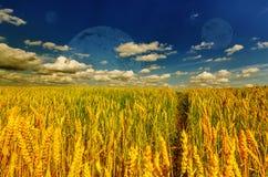 Orecchie del grano e cielo nuvoloso con i pianeti Fotografia Stock Libera da Diritti