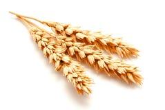 Orecchie del grano isolate su un fondo bianco Immagini Stock Libere da Diritti