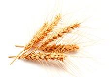 Orecchie del grano isolate su un fondo bianco Immagine Stock