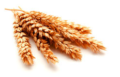 Orecchie del grano isolate su un fondo bianco Immagini Stock