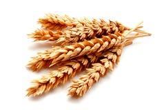 Orecchie del grano isolate su un fondo bianco Fotografia Stock Libera da Diritti