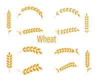 Orecchie del grano o icone del riso messe Fotografia Stock Libera da Diritti