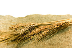 Orecchie di frumento sulla tessile Fotografia Stock