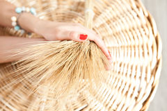 Orecchie di grano nelle mani Immagine Stock