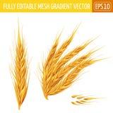orecchie di grano su fondo bianco Illustrazione di vettore Fotografia Stock