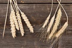 Orecchie di grano sulla tavola di legno Fotografia Stock Libera da Diritti