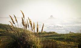 Orecchie di grano vicino all'oceano immagine stock